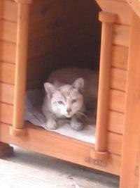 2008.9.5犬小屋s006-s.jpg